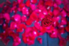 Röda rosor på wood bakgrund, Retro tappning Royaltyfri Foto