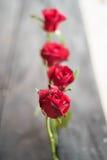 Röda rosor på wood bakgrund, Retro tappning Arkivfoton