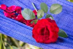 röda rosor som läggas över hessianstyg Arkivfoton