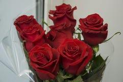 Röda rosor som symbol av förälskelse och passion i buketten royaltyfria bilder