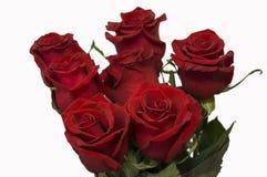 Röda rosor som symbol av förälskelse och passion i buketten på den vita bakgrunden royaltyfri foto