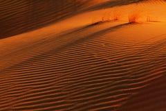 Röda sanddyn och skuggor på solnedgången Arkivfoton