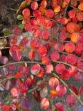 Röda sidor Fotografering för Bildbyråer