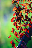 Röda sidor Arkivfoton