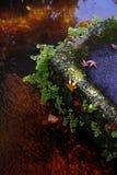Röda sidor av lönnen i höst Arkivbild