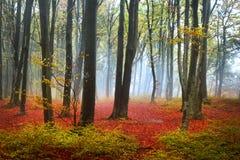 Röda sidor i en dimmig höstskog Royaltyfria Bilder