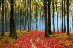 Röda sidor i en dimmig höstskog Arkivbild