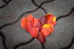 Röda sidor i formen av hjärta ligger på den konkreta tegelplattan Arkivfoton
