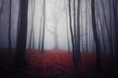 Röda sidor i skog med dimma på allhelgonaafton Royaltyfri Bild