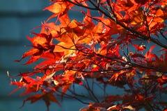 Röda sidor mot en mörk bakgrund Arkivfoto
