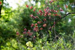 Röda sidor på trädet Arkivbild