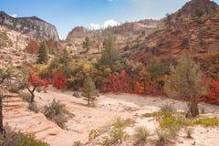Röda sidor på Zion National Park Arkivbild