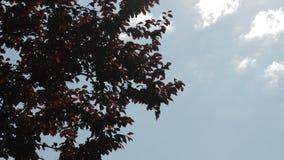 Röda sidor som svänger i vinden på stock video