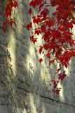 röda skuggor Royaltyfri Fotografi