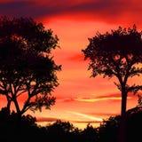 Röda sky och trees Royaltyfri Bild