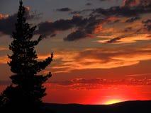 Röda solnedgångwhitmoln och träd royaltyfri bild