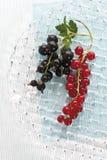 röda svarta vinbär Fotografering för Bildbyråer