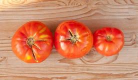 röda tomater Arkivfoto
