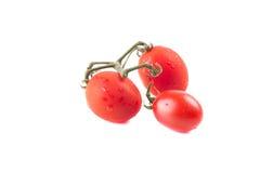 röda tomater Royaltyfri Fotografi