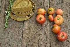 Röda tomater från organisk odling Arkivbild