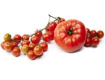 Röda tomater i droppar av vatten Royaltyfri Fotografi