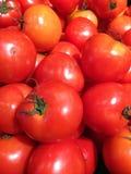 Röda tomater i grönsakmarknaden Fotografering för Bildbyråer