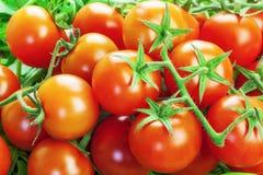 Röda tomater med gräsplaner Arkivbilder