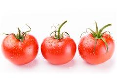 Röda tomater mot en bakgrund Royaltyfria Bilder