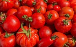 Röda tomater, olika variationer för bakgrundsbild Royaltyfri Fotografi