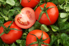 Röda tomater som omges av ny grön machegrönsallat Royaltyfri Fotografi