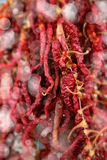 röda torkade peppar Royaltyfri Fotografi