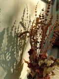 Röda torra blommor i solnedgång arkivbild