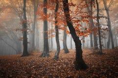 Röda träd i en skog med dimma i höst Arkivbild
