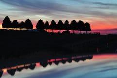 röda trees för radsihouettessolnedgång Royaltyfria Bilder