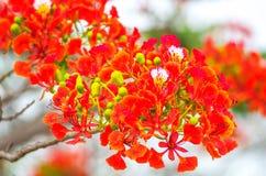 Röda tropiska blommor på vit bakgrund royaltyfri fotografi