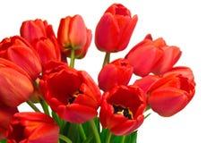 Röda Tulip Bouquet Fotografering för Bildbyråer