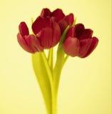 Röda Tulip Flowers Arkivbild