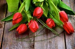 Röda tulpan Arkivfoto
