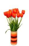 Röda tulpan blommar med gula marginaler i kulör vas, slut upp royaltyfria bilder