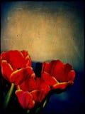 Röda tulpan för Grunge vektor illustrationer