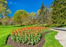 Röda tulpan i drottningen Victoria Park - Niagara Falls, Kanada Arkivfoton