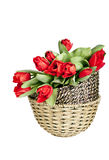 röda tulpan i korg Royaltyfri Fotografi