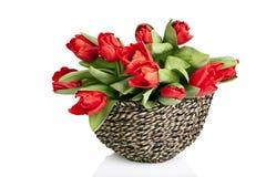 röda tulpan i korg Royaltyfria Bilder