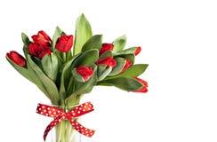 Röda tulpan med det festliga bandet Royaltyfri Bild