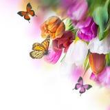 Röda tulpan med gräsplan Royaltyfria Bilder