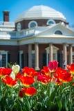 Röda tulpan och Monticello kupol Fotografering för Bildbyråer