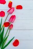 Röda tulpan på vit träbakgrund Top beskådar kopiera avstånd greeting lyckligt nytt år för 2007 kort Royaltyfri Foto