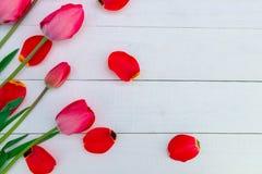 Röda tulpan på vit träbakgrund Top beskådar kopiera avstånd greeting lyckligt nytt år för 2007 kort Arkivbilder