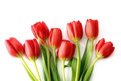 Röda tulpanblommor Royaltyfria Bilder
