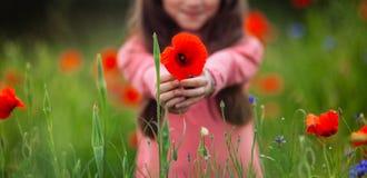 Röda vallmo i händerna av en flicka royaltyfria bilder